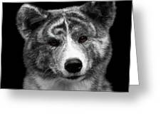 Closeup Portrait Of Akita Inu Dog On Isolated Black Background Greeting Card