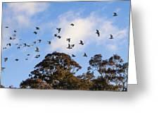Cockatoos - Canberra - Australia Greeting Card