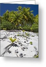 Coconut Palms On A Polynesian Beach Greeting Card