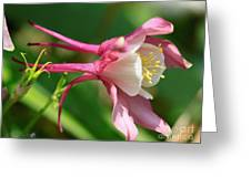 Columbine From The Songbird Series Named Robin Greeting Card