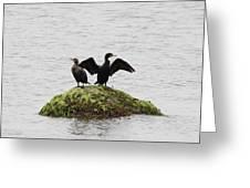 Cormorants Port Jefferson New York Greeting Card