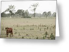 Country Cow Greeting Card