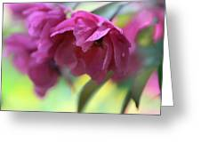 Crabapple Blossom Greeting Card