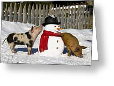 Curious Piglets And Snowman Greeting Card