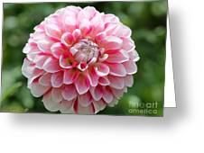 Dahlia Named Hawaii Greeting Card