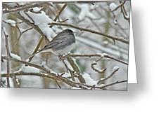 Dark-eyed Junco - Snowbird Greeting Card