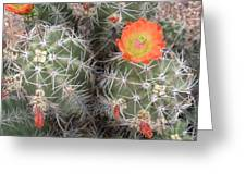 Desert Bloom Greeting Card