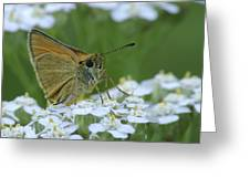 Dion Skipper Yarrow Blossoms Greeting Card
