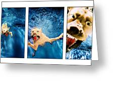 Dog Underwater Series Greeting Card