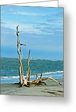 Driftwood On Beach Greeting Card