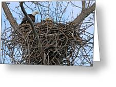 2 Eagles On Nest  3172b  Greeting Card