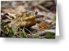 European Toad Greeting Card