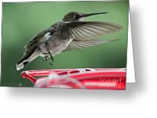 Female Ruby-throated Hummingbird Greeting Card