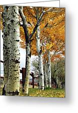 Fenceline Of Fall Aspens Greeting Card