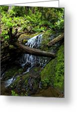 Fern Falls At Jedediah Redwoods State Park Greeting Card
