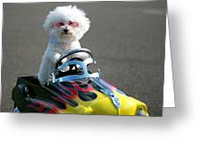 Fifi Goes For A Ride Greeting Card
