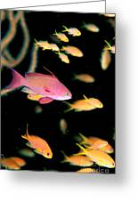 Fiji, Reef Scene Greeting Card