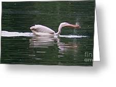 Fishing Pelican Greeting Card