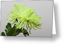Floral Still Life Greeting Card