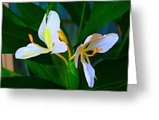 Flowering Plant Greeting Card