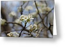 Flowering Trees Greeting Card