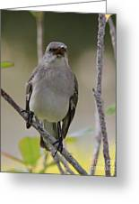 Fly Catcher Greeting Card