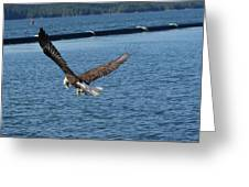 Flying Eagle. Greeting Card