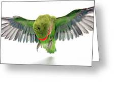 Flying Parrot  Greeting Card