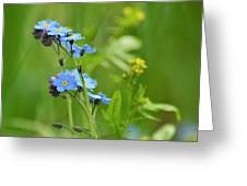 Forget-me-not. Greeting Card