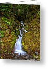 Streaming In The Olympic Rainforest Greeting Card