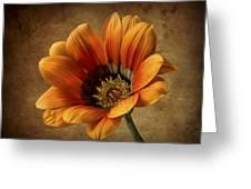 Gazinia Greeting Card