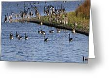 Geese On The Water Greeting Card
