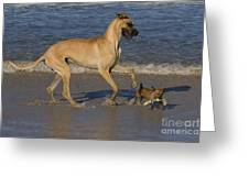 Giant And Tiny Dogs Greeting Card