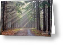 God Beams - Coniferous Forest In Fog Greeting Card