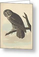 Great Cinereous Owl Greeting Card