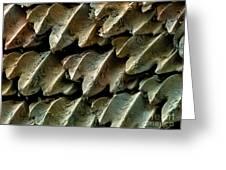 Great Hammerhead Shark Skin, Sem Greeting Card