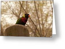Green Naped Lorikeet Greeting Card