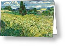 Green Wheat Field With Cypress Greeting Card