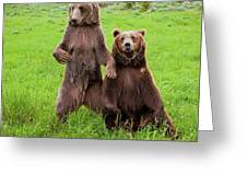 Grizzly Bear Arctos Ursus Greeting Card
