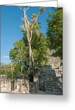 Grupo Coba At The Coba Ruins  Greeting Card