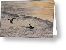 Gulls At Gloucester Greeting Card