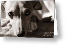 Heart You Italian Greyhound Greeting Card
