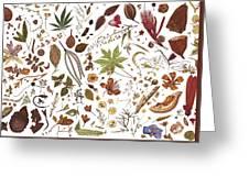 Herbarium Specimen Greeting Card
