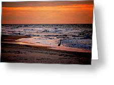 2 Herons On The Beach Greeting Card