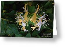 Honeysuckle Vine Greeting Card