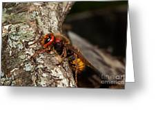 Hornet Vespa Crabo Greeting Card