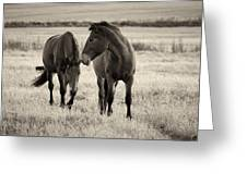 Horses Of The Fall  Bw Greeting Card