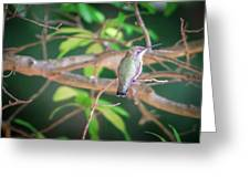 Hummingbird Found In Wild Nature On Sunny Day Greeting Card