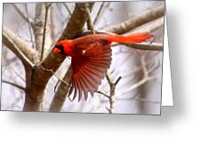 Img_0001 - Northern Cardinal Greeting Card