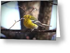 Img_0001 - Pine Warbler Greeting Card